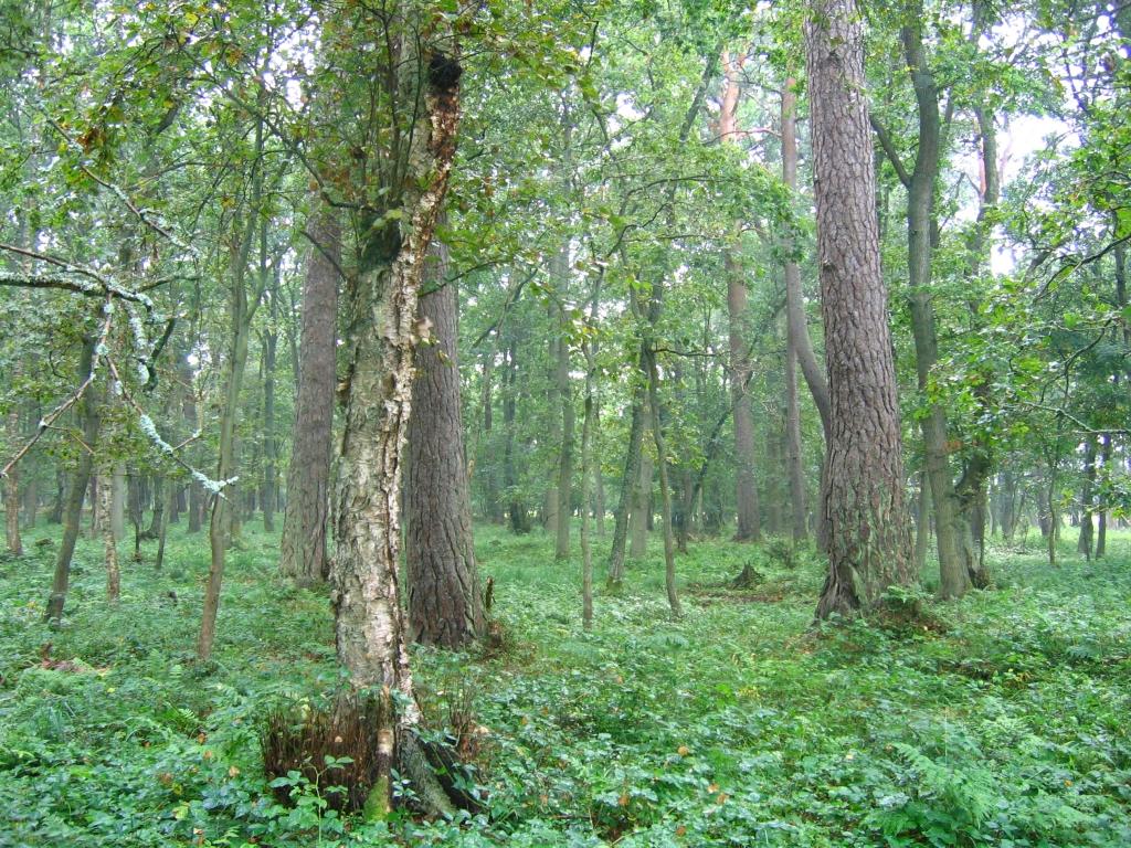 nr5 las brzozowo debowy
